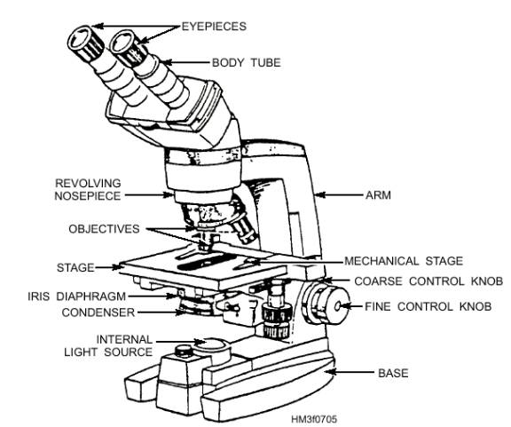 Printables The Compound Microscope Worksheet diagram of compound light microscope optics binoculars labeled drawing a digitals microscope
