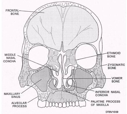 Floor Of The Cranial Cavity Viewed From Above Chapter 14