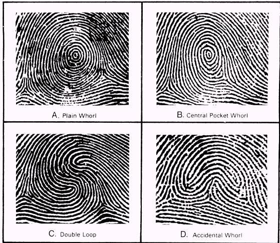 Very popular images: of fingerprint patterns